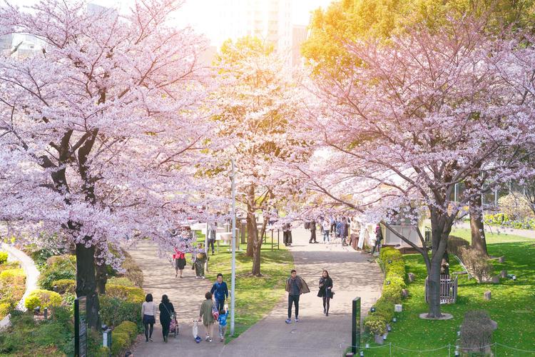 20 Best Places To Enjoy Sakura Cherry Blossoms In Japan Tsunagu Japan