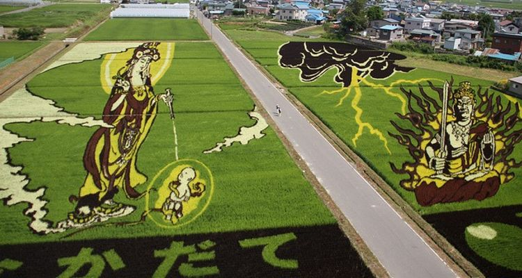 Rice fields are canvases for Japanese people! Amazing art in rice fields. | tsunagu Japan