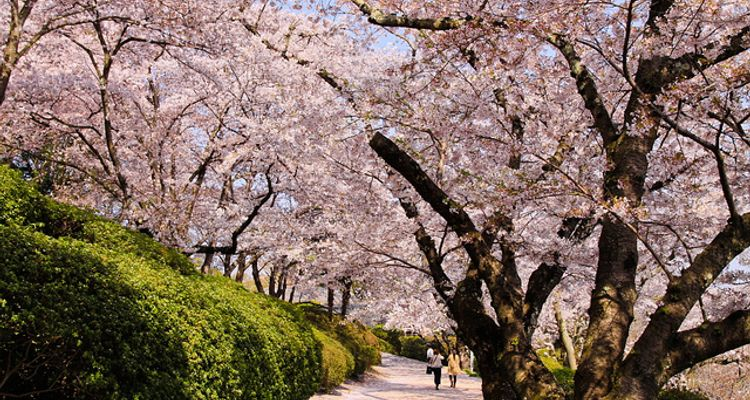 8 Beautiful Flowers Of The Four Seasons To Be Seen In Japan