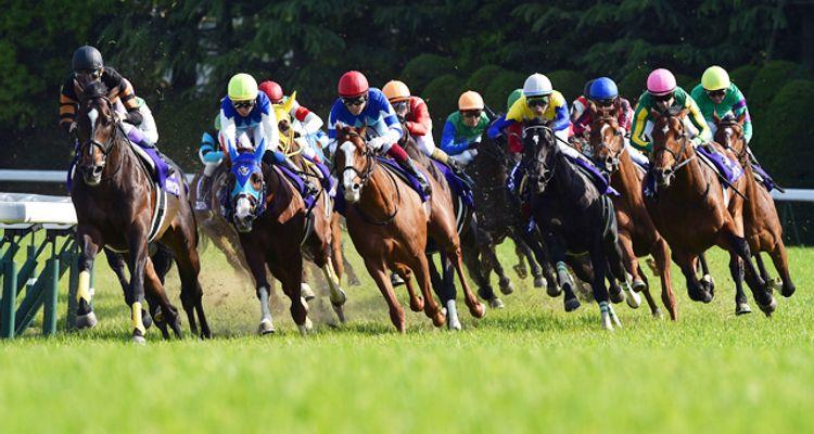 betting on race horses