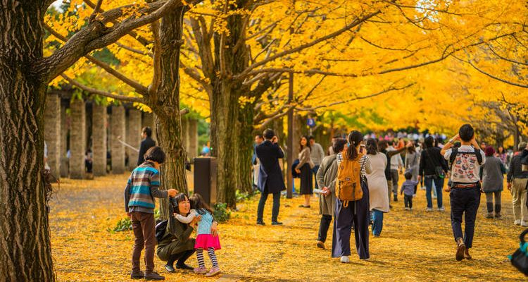 Fall Foliage Forecast When And Where To See Autumn Leaves In Japan In 2019 Tsunagu Japan