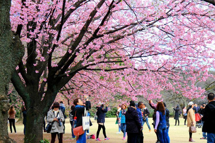 công viên Shinjuku Gyoen