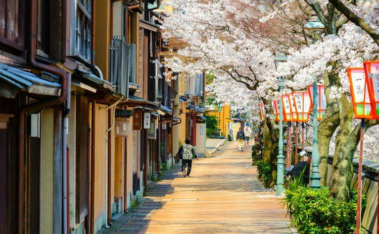 hoa anh đào ở Kanazawa