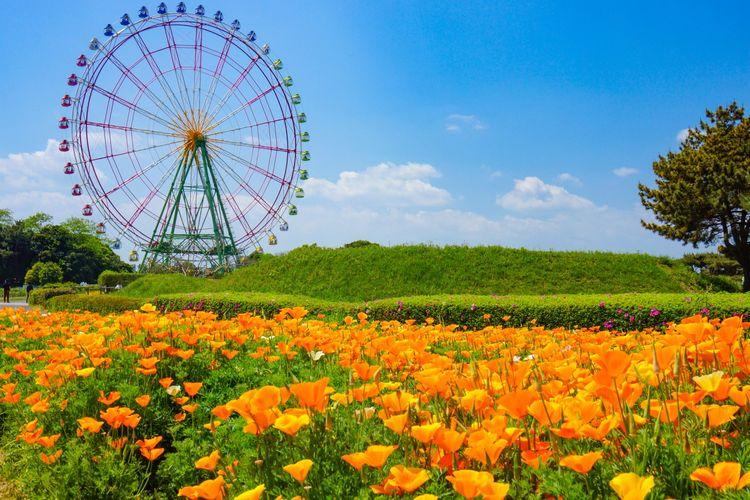 Hitachi Seaside Park Ferris wheel