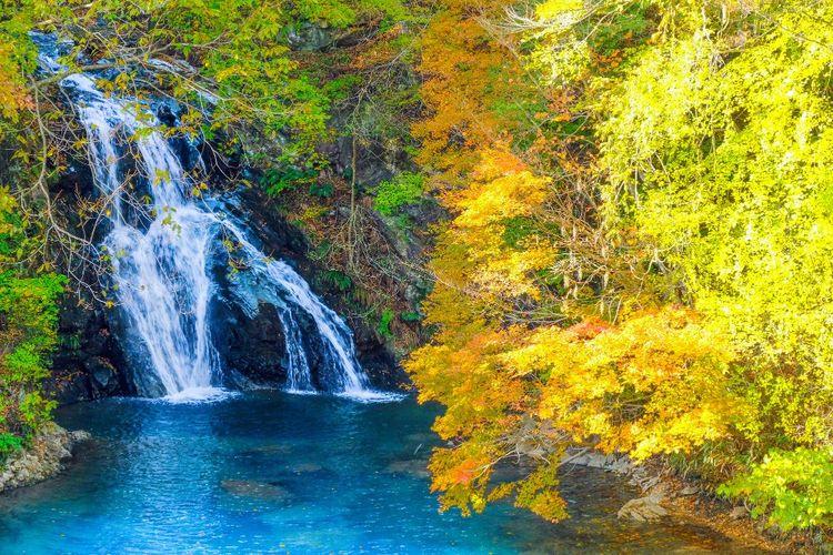 thác momotarou vào mùa thu