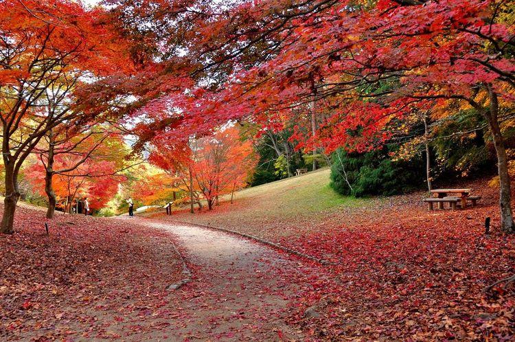 Vườn Kobe Municipal Arboretum