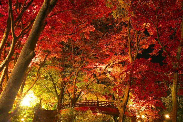Lễ hội cây phong tại Vườn mận Atami Baien