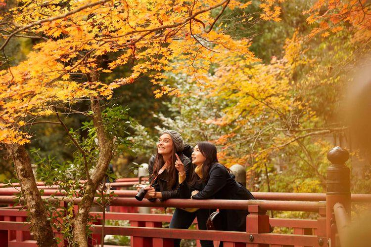 兩位女子背著相機倚著橋欣賞楓葉