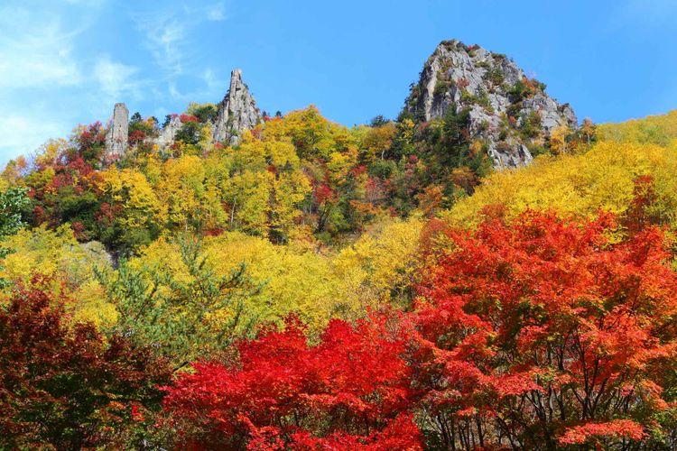 層雲峽的楓葉美景