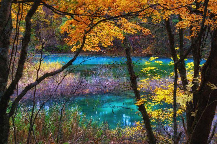 裏磐梯的楓葉美景