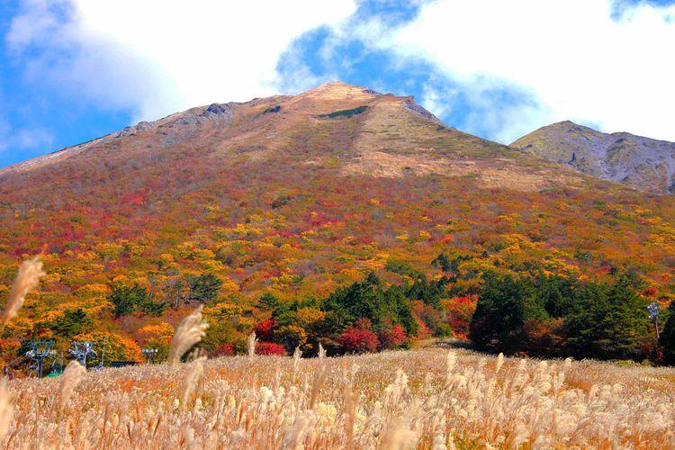 鳥取縣大山的楓葉美景
