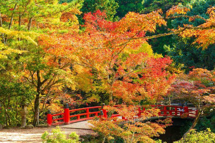 廣島縣宮島的楓葉美景