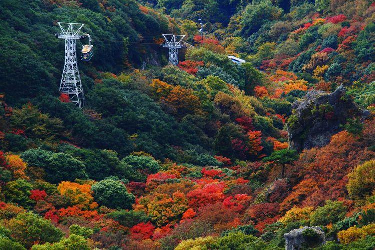 香川縣寒霞溪的楓葉美景
