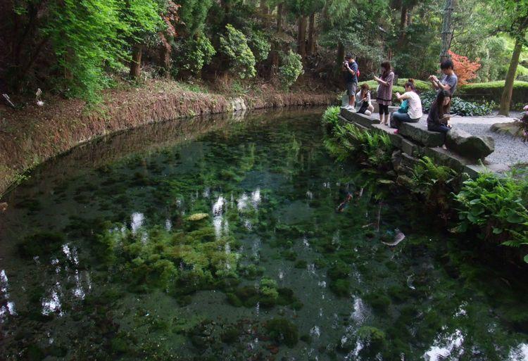shirakawa suigen water spring kumamoto