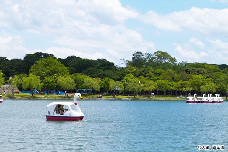 大濠西公園的湖景上有人正開著天鵝船