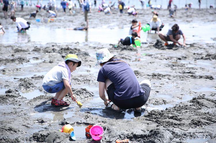 Đào ngao, sò trên bãi biển