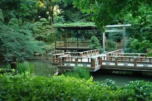 20070812_harajuku_togo_pond