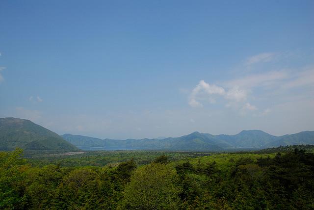 2. Aokigahara-woodlands