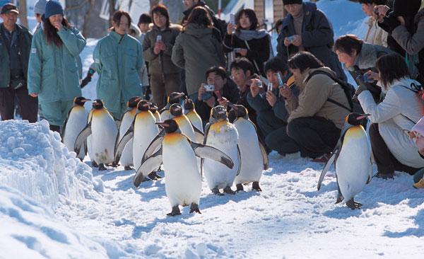 12. Asahiyama Zoo