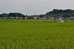 5. rice field