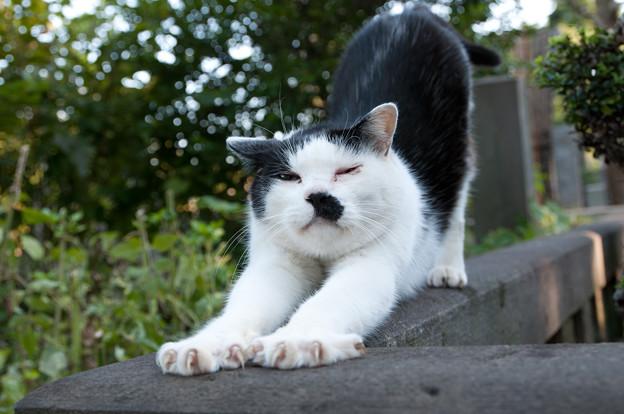 yanakareien-cat