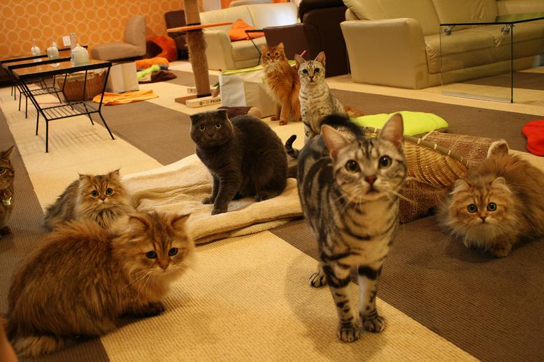 Cat Cafe In Osaka Japan