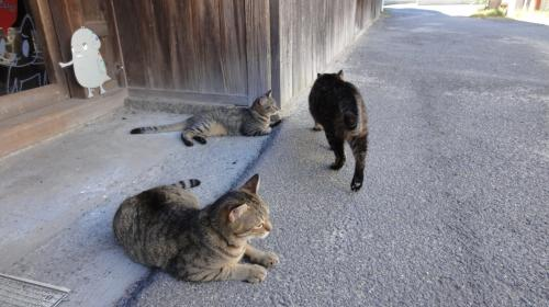 nao-cat2