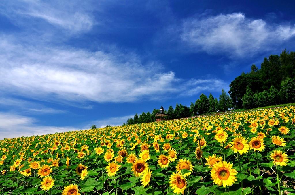 1.彩花の里・佐々木ファーム