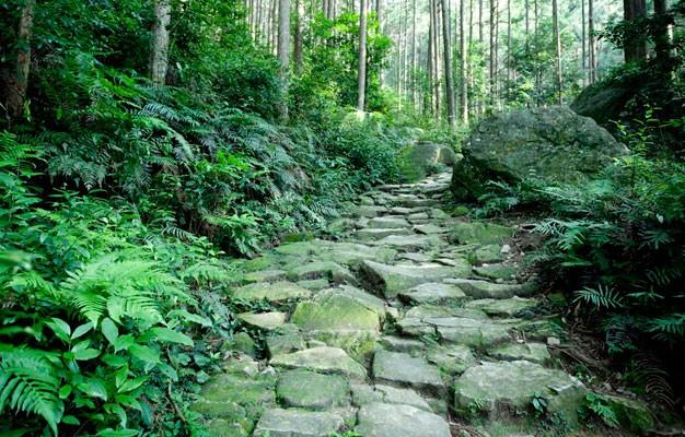 11熊野古道伊勢路