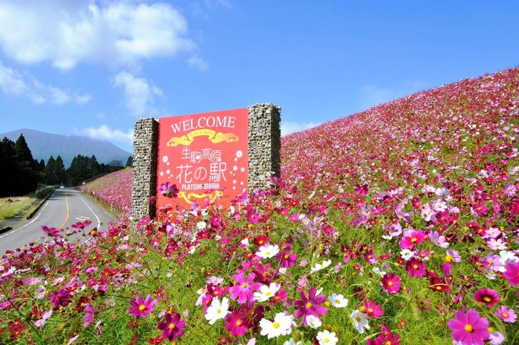 15. 生駒高原