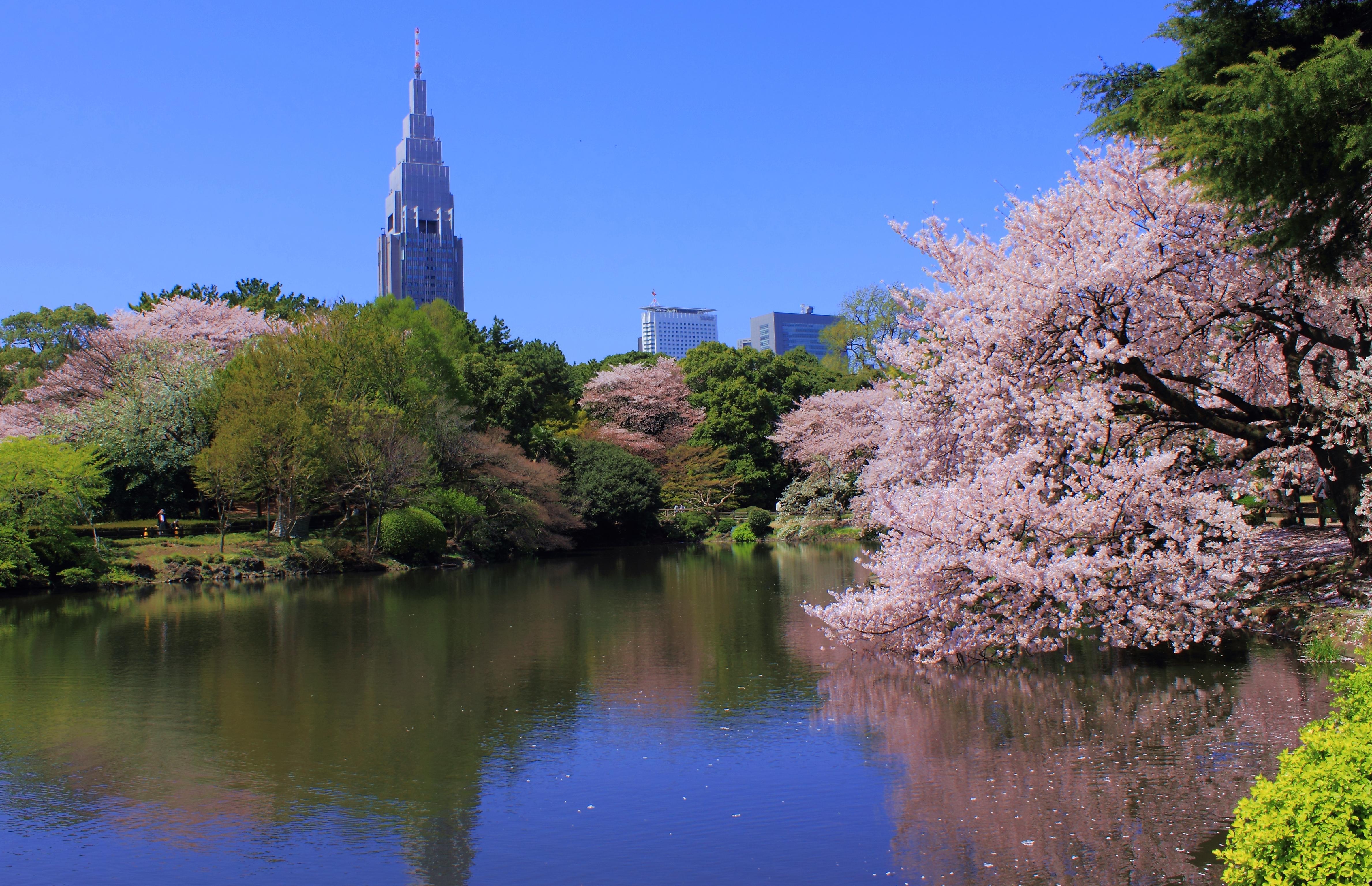 8 Beautiful Parks To Visit In Tokyo Tsunagu Japan