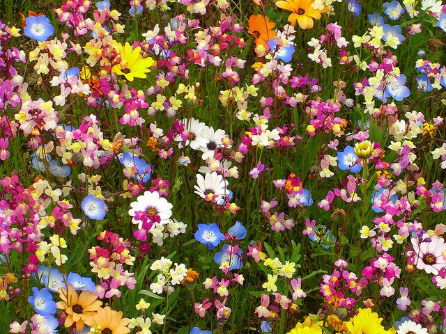 Japan Garden Flowers: 16 Must-See Flower Gardens Around Japan