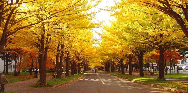 3. 北海道大学キャンパス
