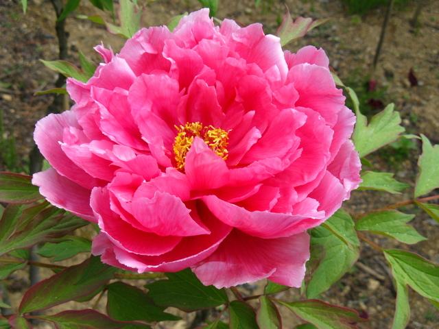 5 Flowers That Look Like Vaginas  LA Weekly