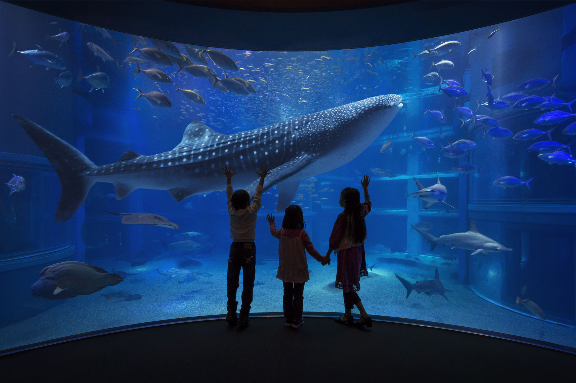 8 aquariums you can only visit in japan tsunagu japan for Aquarium video