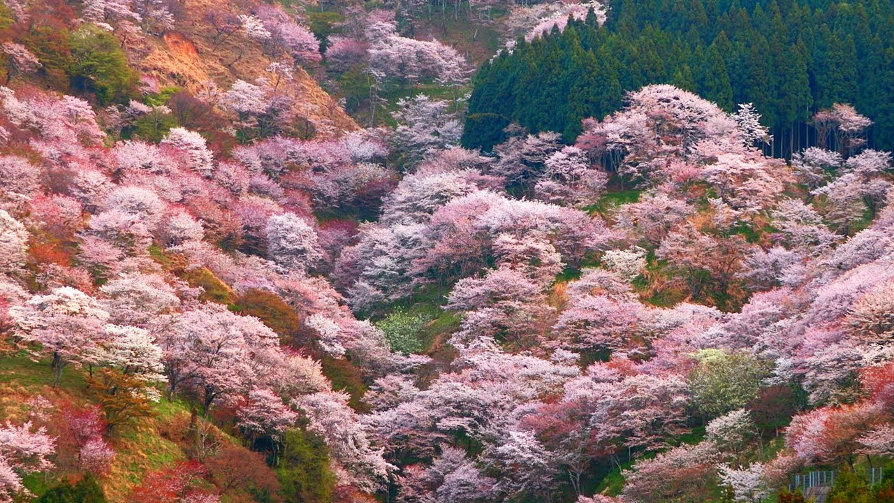 15 Beautiful Japanese Villages You Must Visit