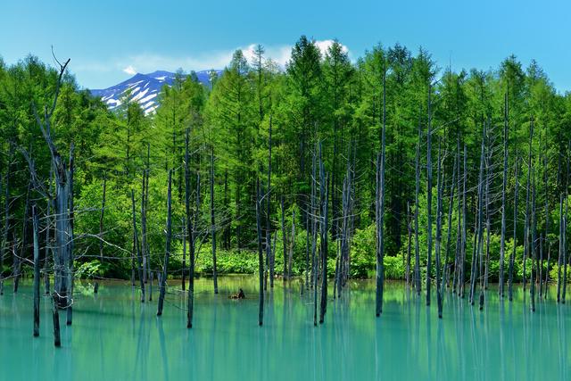 pixta_17139896_S_青い池